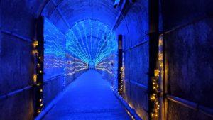 七ツ釜鍾乳洞七ツ釜鍾乳洞のイベント「光の鍾乳洞」へ行ってみた!|長崎県西海市